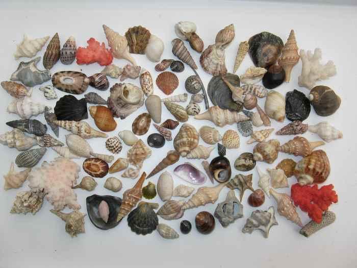 Coastal components